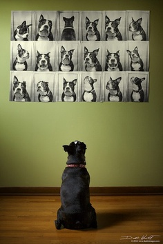 dog-photo-wall