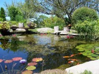 Picture Of Cool Backyard Ponds