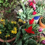Container gardening in my small front garden