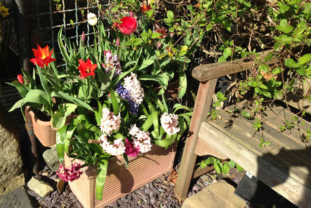 hyacinths-and-tulips