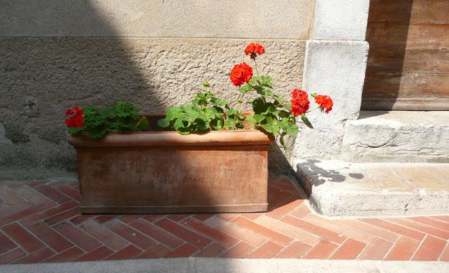 mouans-sartoux-pelargonium