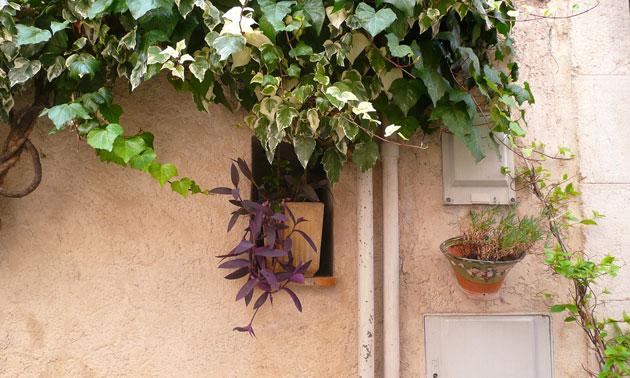 mouans-sartoux-window