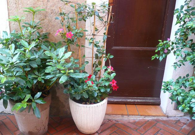 provence-contaner-garden