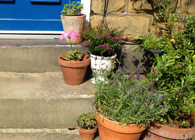 plant-pots-on-steps