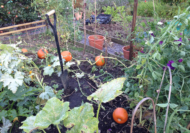 pumpkins-and-sweet-peas
