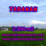 TANAH DI BALI, MURAH DIJUAL DI TABANAN TJTB097