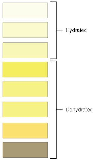Urine Colors Chart Meaning of Pee Color, Smell and Consistency