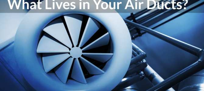 What Lives in Your Air Ducts?