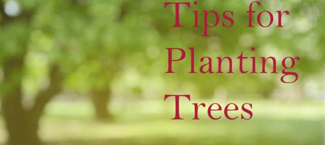 Tips for Planting Trees