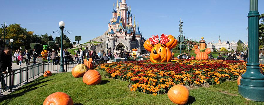 Fall Dog Wallpaper When To Visit Disneyland 174 Paris