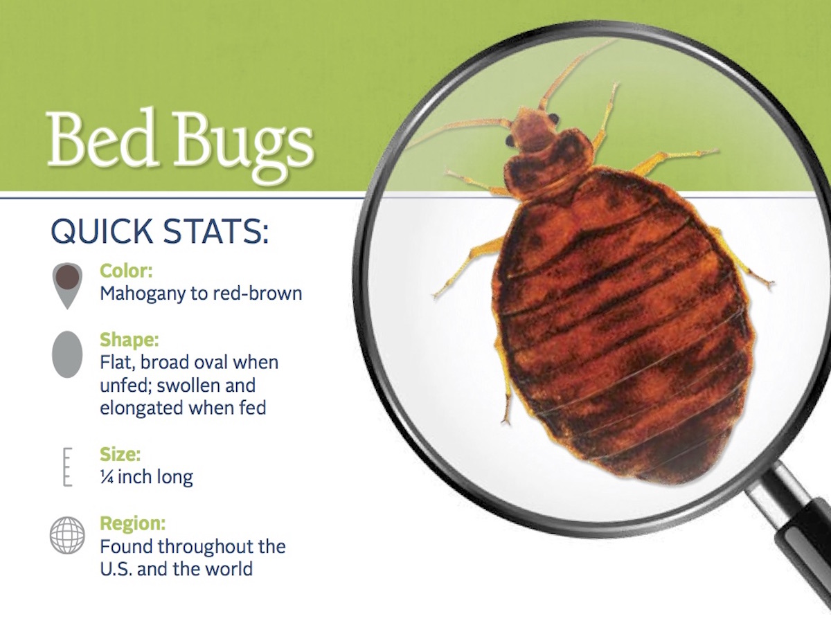Distance Cme Bed Bugs