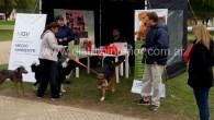 Este sábado por la mañana se vacunaron unos 70 animalesen la Plaza principal, en el inicio de la campaña que se lleva a cabo desde el Centro de Zoonosis Municipal […]