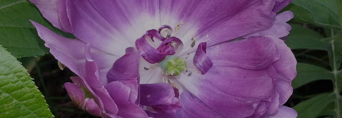 utvaldabilder_12juni-blomma