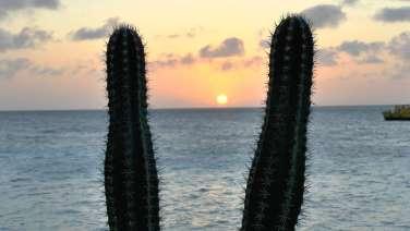 Bonaire7