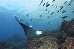 Galapagos16