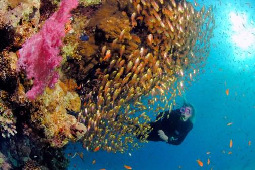 Fischschwarm am Korallenriff|Kurt Amsler/www.photosub.com