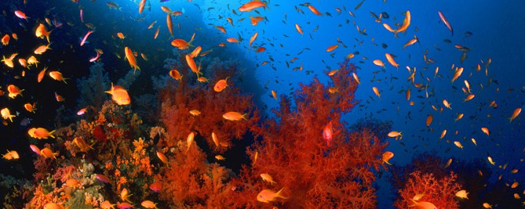 Rotes Meer UW Unterwasser