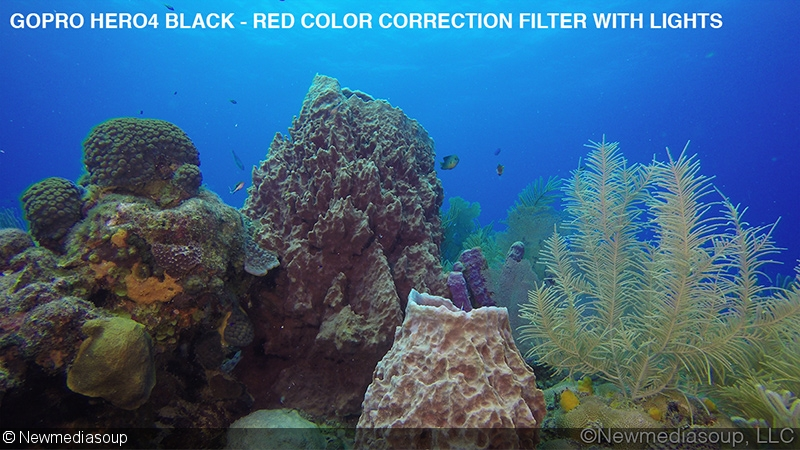 How to Get Amazing Underwater Color with Your GoPro