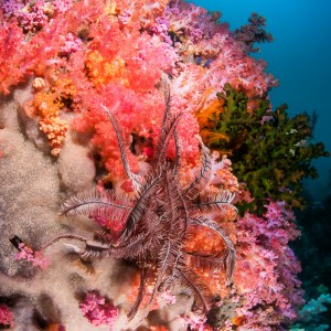 Colourful soft coral scenery