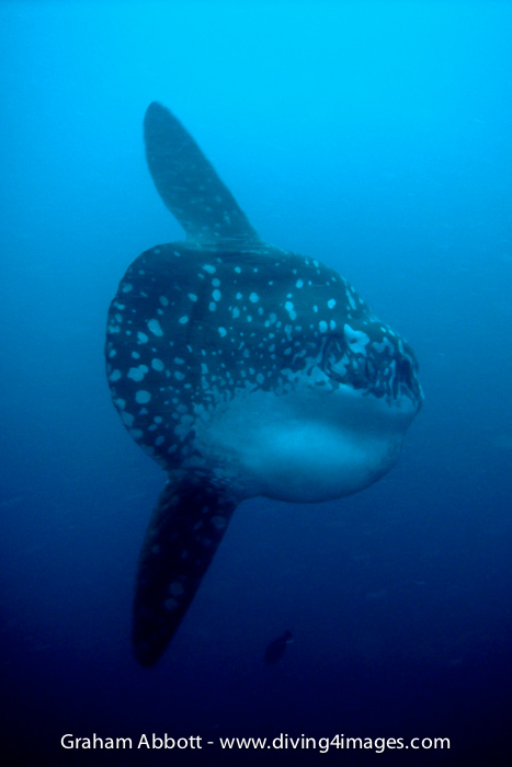 Alor Flores Photo Gallery Underwater Critters Reefs