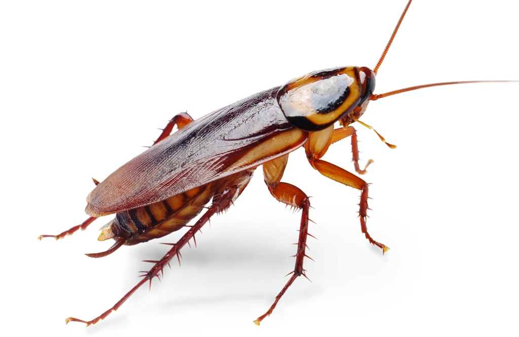 roaches-diy-bug-control