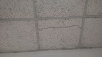Asbestos Ceiling Tiles?!?!? - General DIY Discussions ...