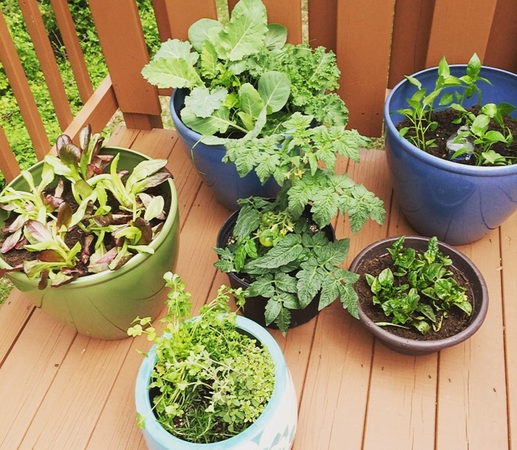 Alicia Lawrence's Vegetable Container Garden