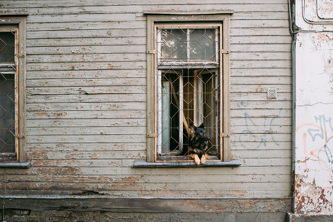 is renovating a home a good idea, doggy in window says it's better than buying a new home