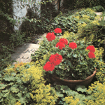 Introduction to Gardening