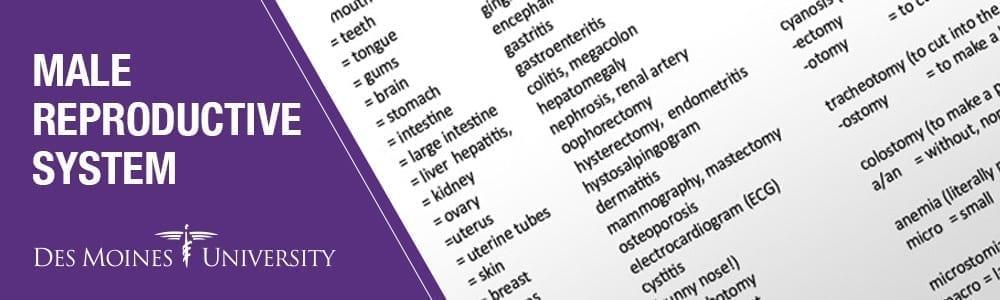 Male reproductive system diseases - Des Moines University