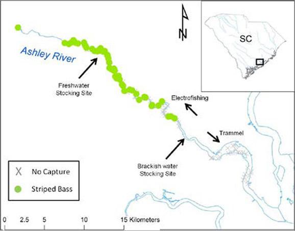 Marine Stocking Research Program