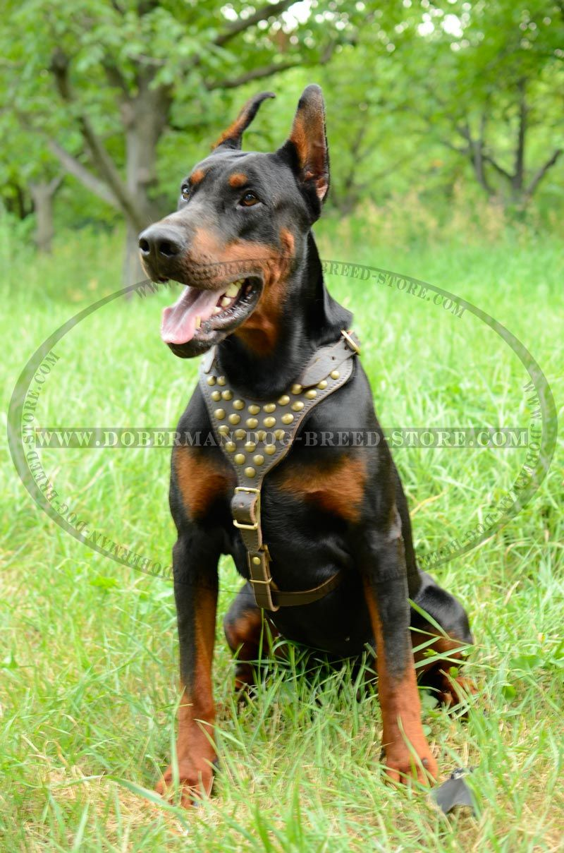 Fullsize Of Best Harness For Dogs