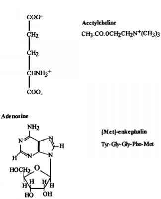 Neurotransmitters Agonists And Antagonists - Drug Design