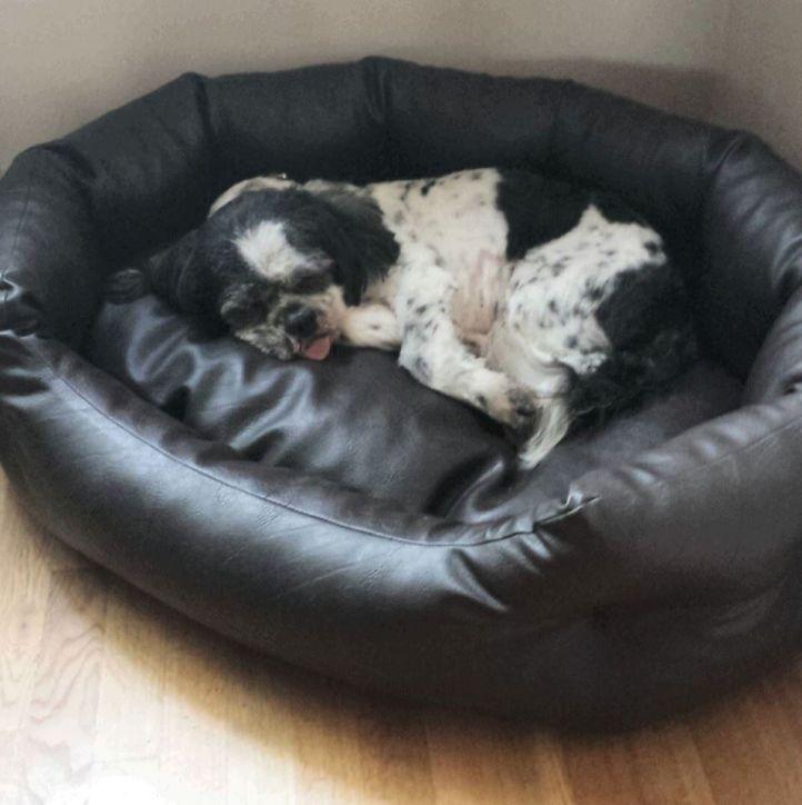 my mums dog Oscar.. still miss you so so much. run free old boy xxxx
