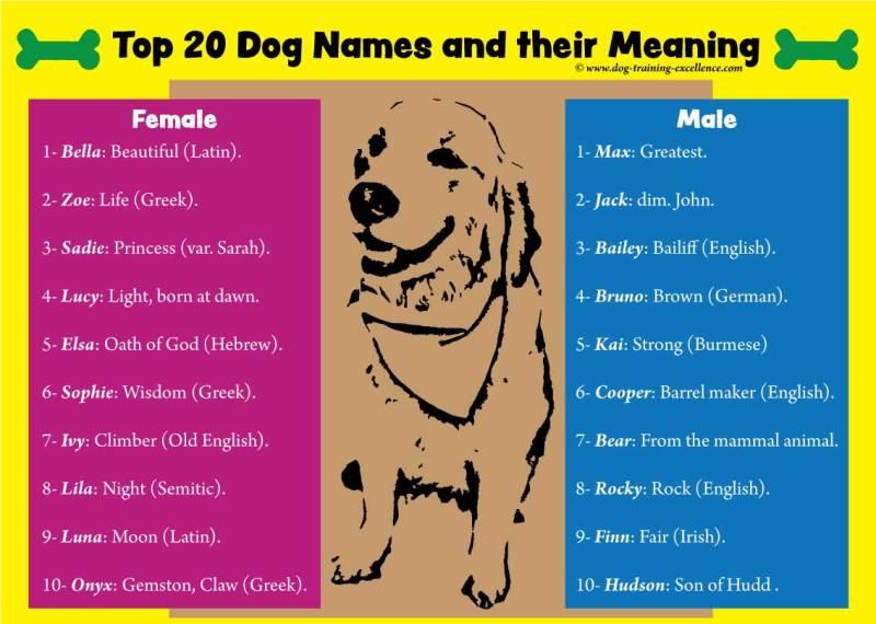 Large Of Latin For Dog