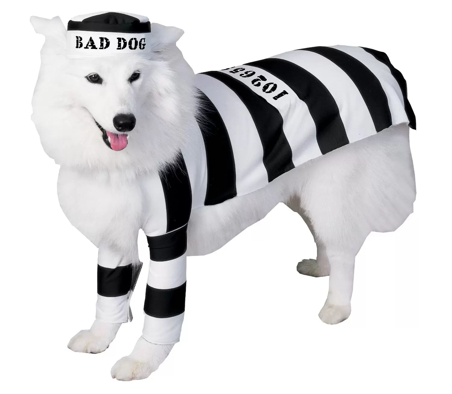 72 Most Adorable Dog Costumes for 2017