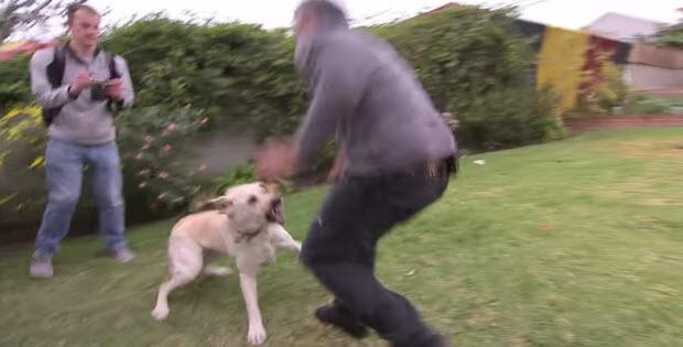 Dog Whisperer Training Puppies Not To Bite