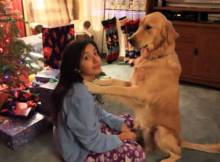 golden-retriever-dog-giving-kisses