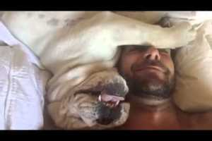 When This Bulldog Starts To Make Sounds When Woken Up His Owners Can't Stop Laughing