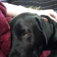 Buddy likes a human dog bed best   DogCast Radio