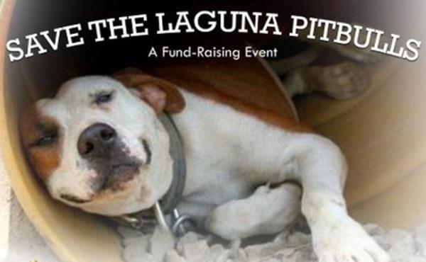 Save the Laguna Pitbulls Fund Raising.