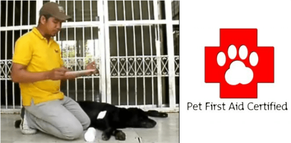 Pet First Aid – How to Bandage a Wounded Dog