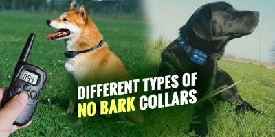 Different Types of No Bark Collars.