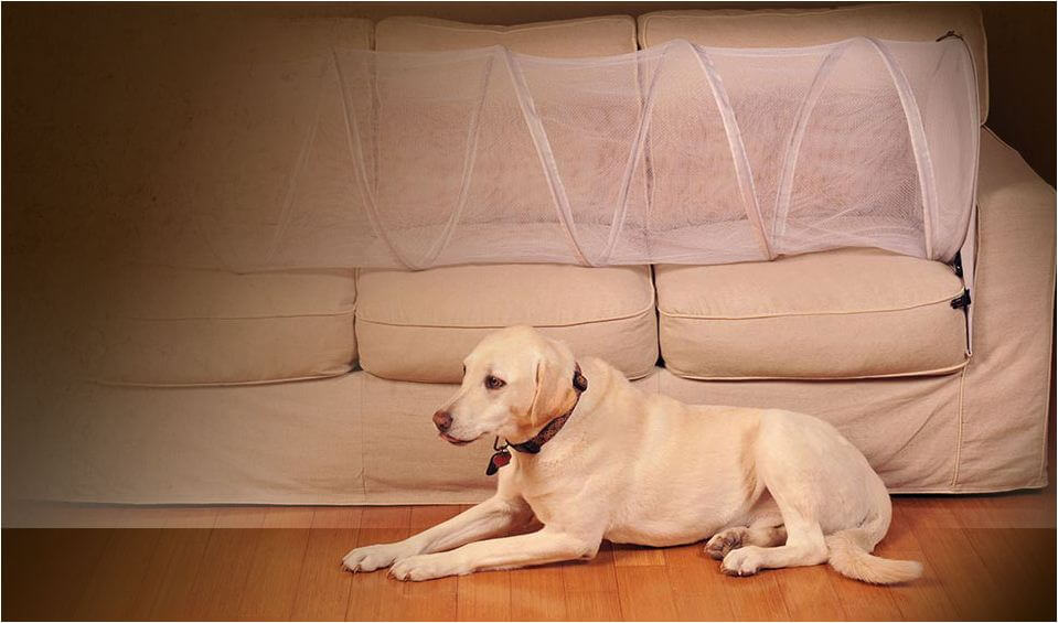 How to Keep Dog Off Couch - guide