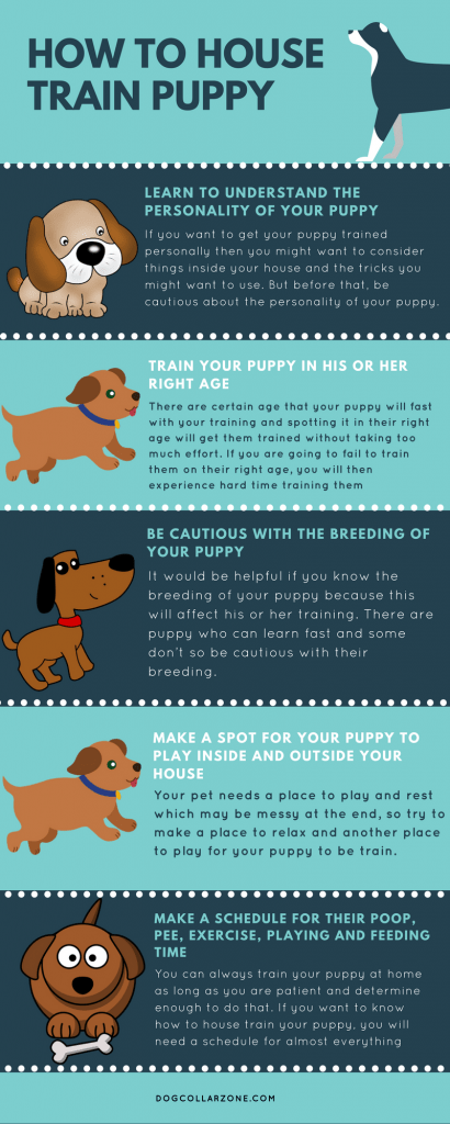 How to House Train Puppy Info-graphic