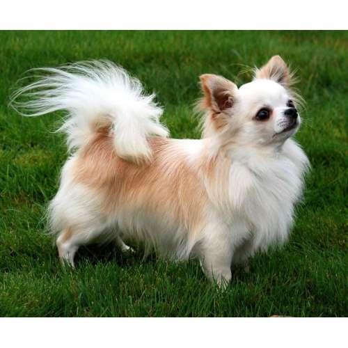 Medium Crop Of Most Affectionate Dog Breeds