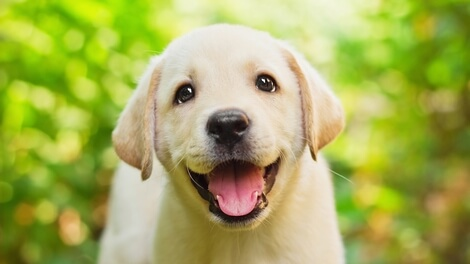 Top 15 Best Large Breed Puppy Foods 2019 Dog Food Advisor