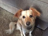 How to Stop Separation Anxiety for a Little Rescue Dog ...