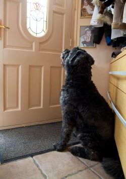Seemly Bigstock Dog Waiting At Door 6002044 Most Loyal Dog Breeds Australian Shepherd Most Loyal Dog Breeds Uk