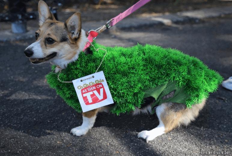 Pups Show Off Creative Dog Costumes at Tompkins Square